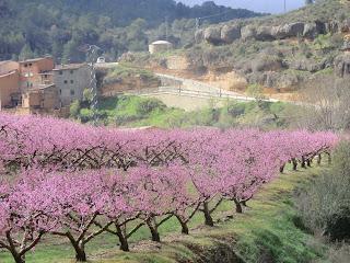Floración de los duraznos en Margalef..
