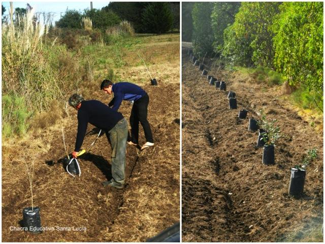 Midiendo la distancia entre los árboles a plantar - Chacra Educativa Santa Lucía