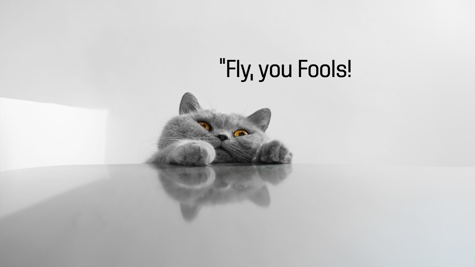 Fly You Fools Cat Funny Wallpapers HD