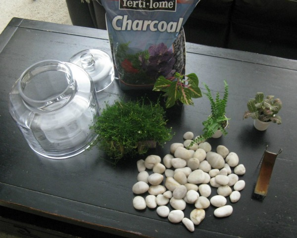 Get the Tutorial for this DIY Fern and Moss Terrarium at Mrs. Hines' Class