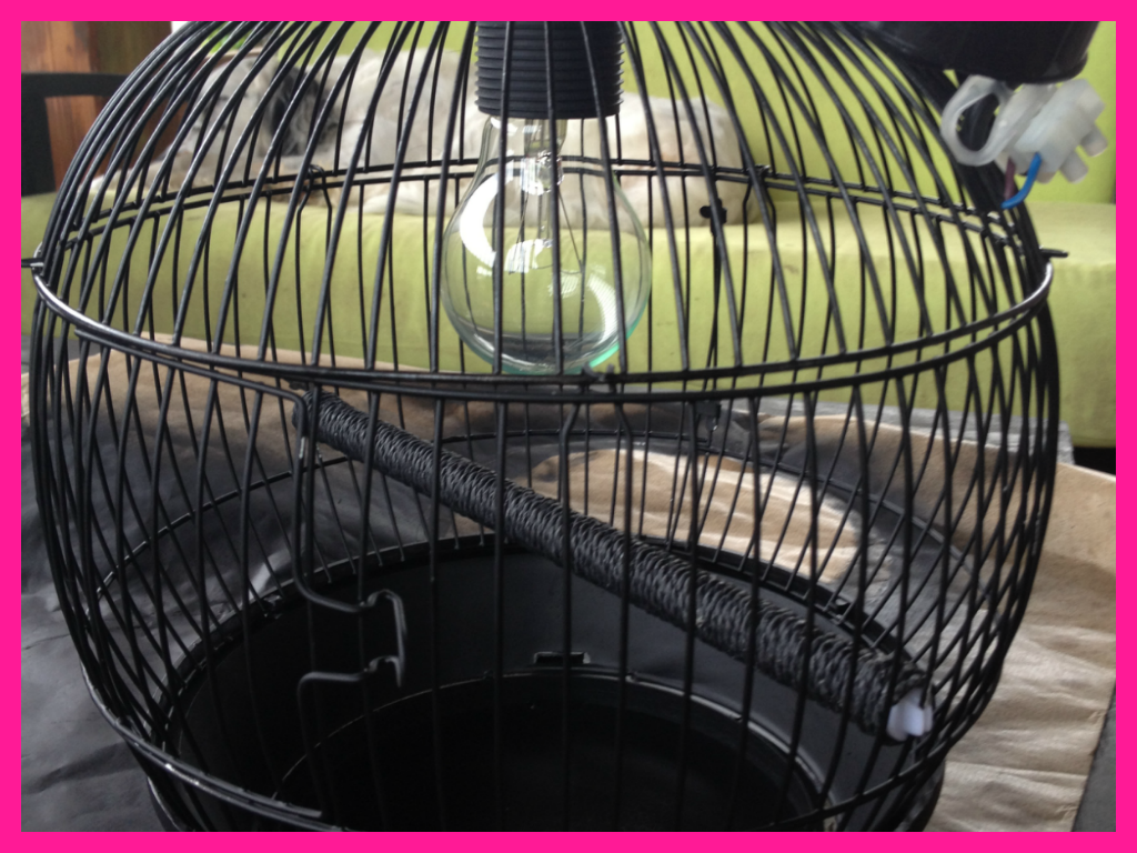 spray painted birdcage ceiling lamp /lampara jaula de pajaros de techo pintura spray handmade