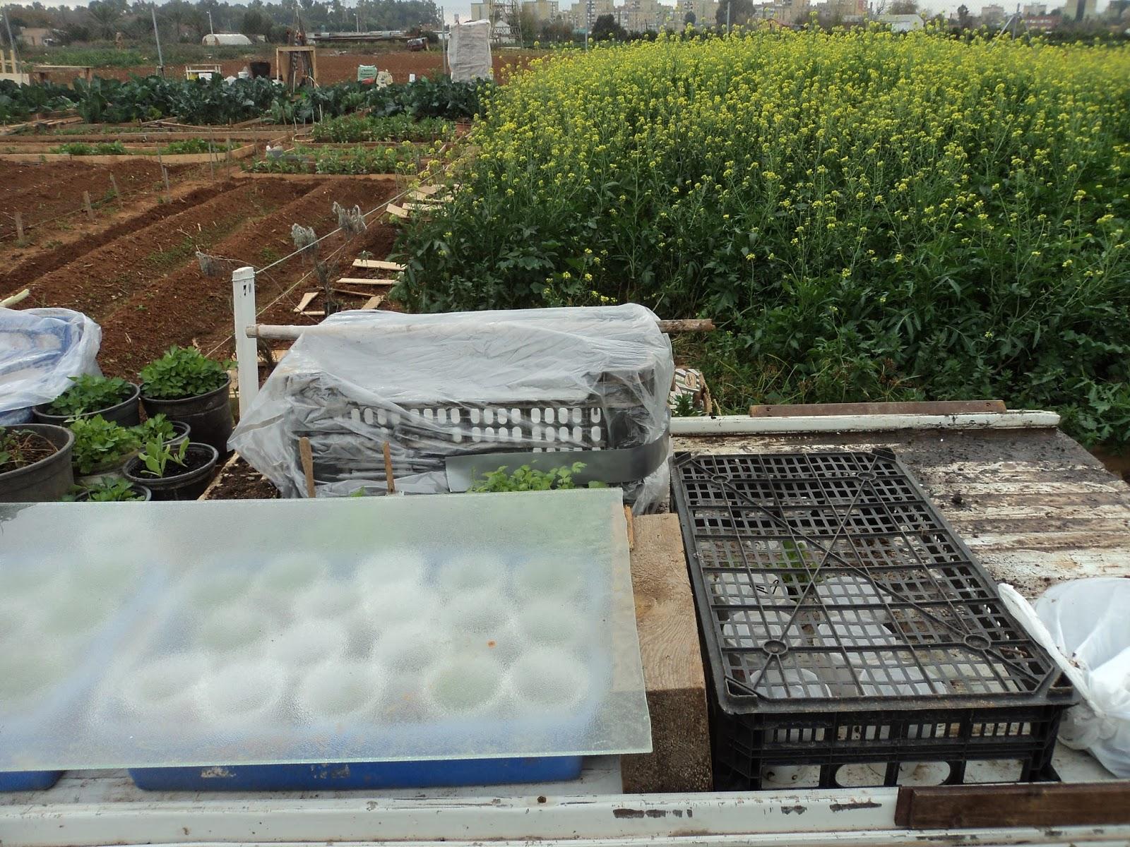 semilleros y caseros
