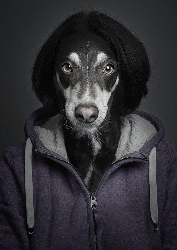 imagens, cães, criatividade, fotografia, arte, curiosidades, caes iguais pessoas, fotografia de animais, eu adoro morar na internet