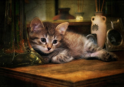 Hermoso gatito - Cute Kitten