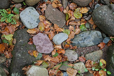 Dry leaves and river stones on Texture Manor Library