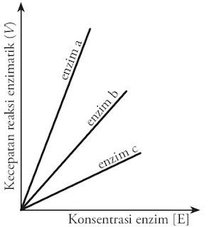 Hubungan laju reaksi konsentrasi enzim