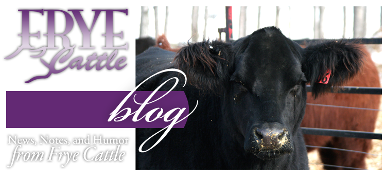 Frye Cattle