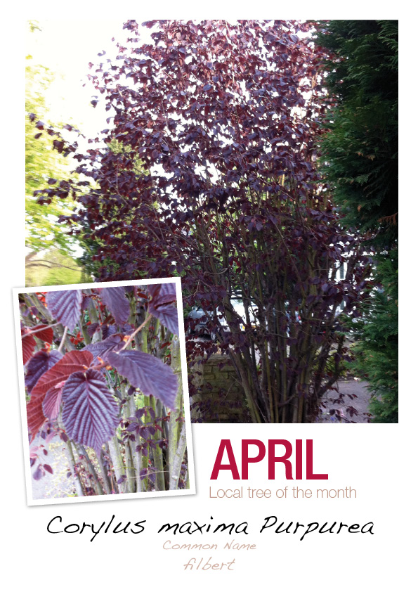 Outerspacegardendesign wimbledon tree of the month april for Outer space garden design cumbria