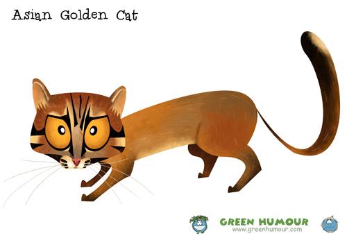 Asian Domestic Cat Breeds