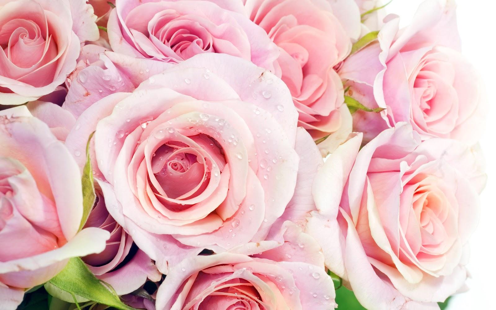 http://3.bp.blogspot.com/-hPRKO6YtGfo/UJzTgEcrVPI/AAAAAAAAA9c/Gd7Vpzlzd44/s1600/mh+studio+fort+abbas+mubashir+hassan+rose+03452004005+0632510005+news+pao+paper+tv+pic+pakistan+(19).jpg