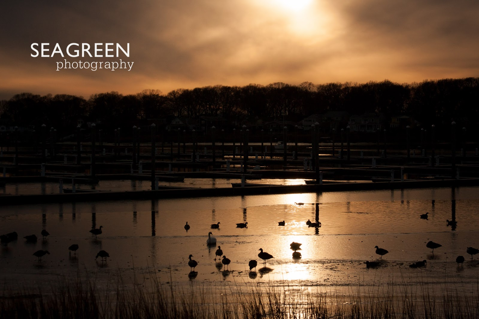 Birds at Sunset - Sea Green Photography Rhode Island