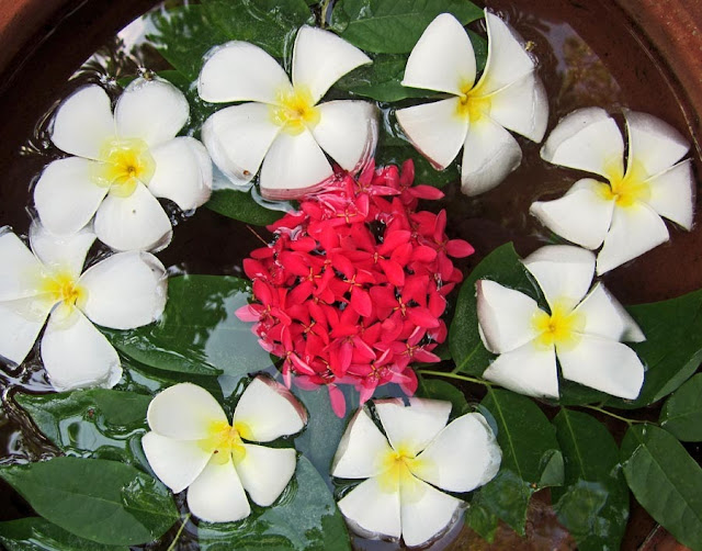 simple flower arrangement with inexpensive flowers