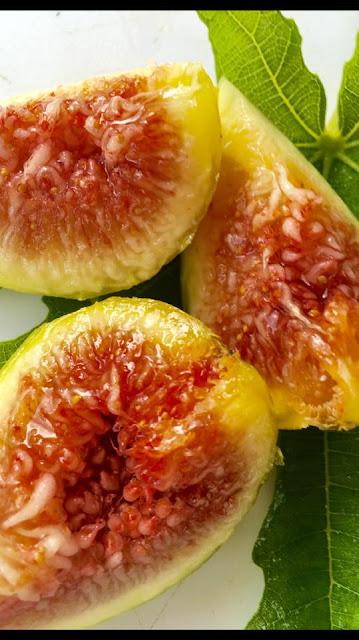 SECALINO DALMATIE Figs