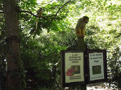 zoo de la Boissière du Doré, zoo, singe, bullelodie