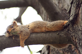 Funny Lazy Squirrel