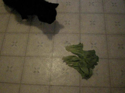 Cat vs a piece of lettuce.  He wants to eat it, but is afraid of it because it got hooked on his paw when he grabbed it.