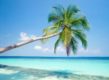 El justo florecerá como la palmera; crecerá como cedro en el Líbano.