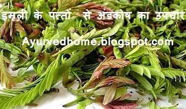 use of tamarind leaves to cure Andkosha