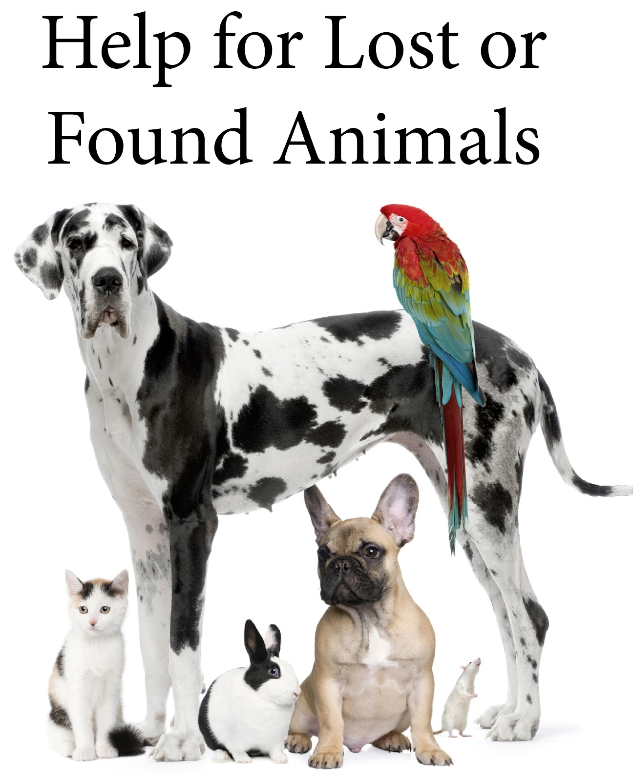 Help For Lost Or Found Animals  Missing Pet Template