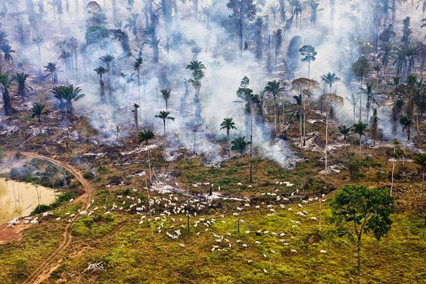"Bagian dari hutan Amazon di Brazil, dibakar untuk ""Digunakan"""