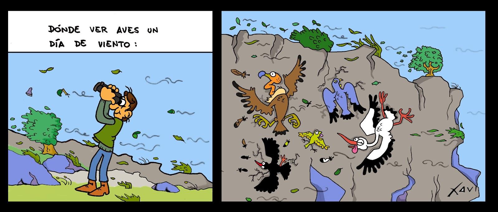 Aves y viento