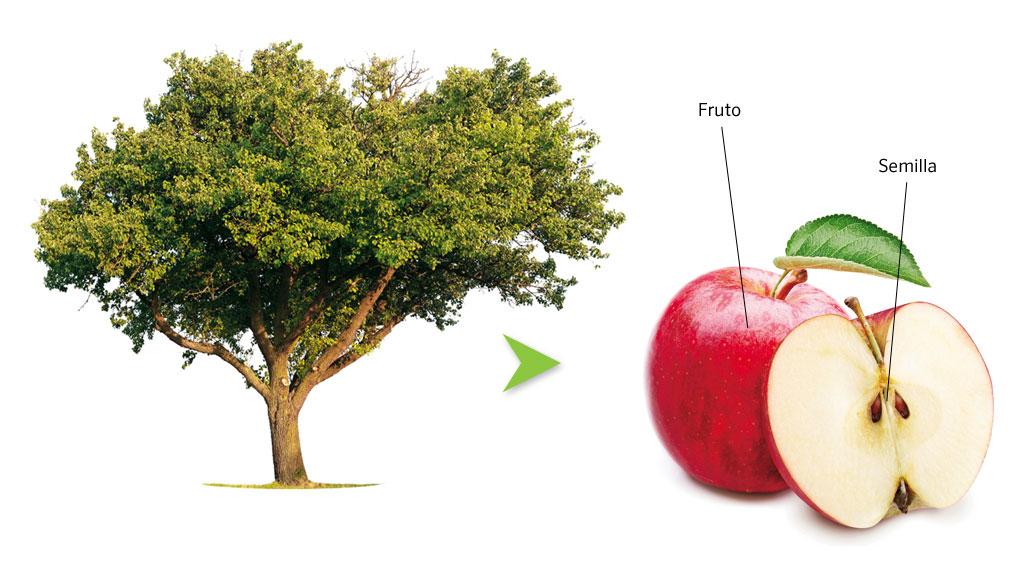 Clase de Ciencias Naturales plantas Angiospermas y Gimnospermas