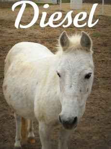 Lil Bit of Diesel