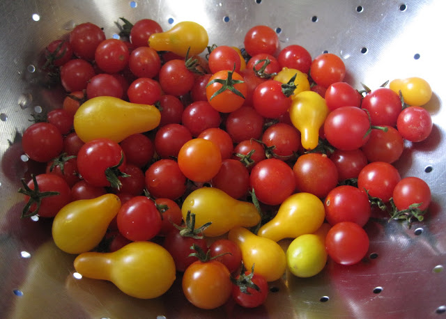 red orange and yellow cherry tomatoes