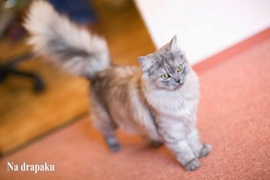 Czy urozmaicać kotu dietę?