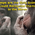 Chimps are the Only Animals Who Could Recognize themselves in the Mirror