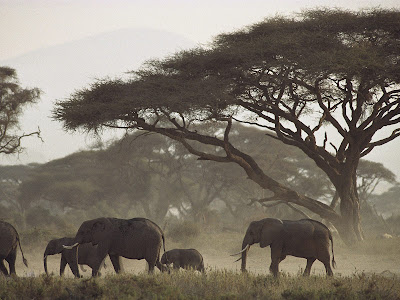 Kenya mothers  and calves elephant on forest images