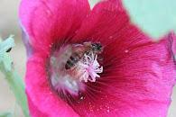 Les abeilles et nous