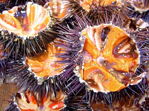 Best Vietnamese Sea Urchin Porridge Food (Chao Nhim Bien)