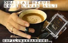 khasiat manfaat minum kopi luwak asli