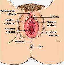 http://3.bp.blogspot.com/-hRaj7Oh1YjM/UkbuZUfzBVI/AAAAAAAABDM/-JSQ0JZXRbM/s1600/perineo_femenino.jpg