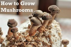 Growing Mushrooms From Scratch At Home