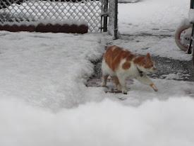 Dexter hates snow