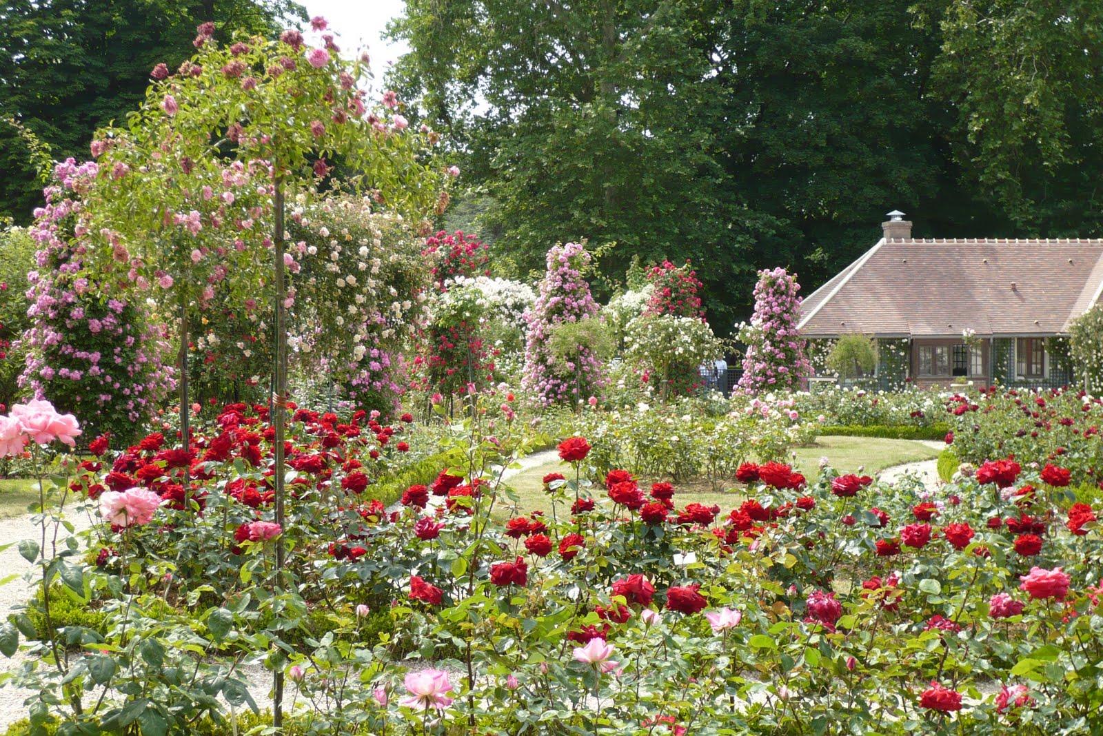 le jardin de pacalou un jardin de roses. Black Bedroom Furniture Sets. Home Design Ideas