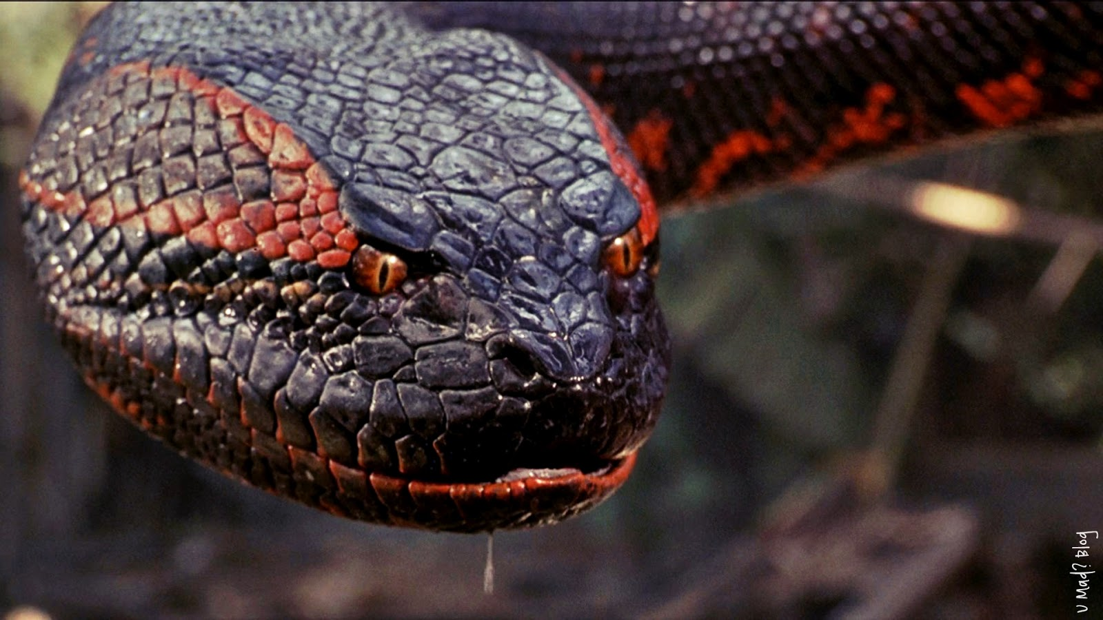 python wallpaper