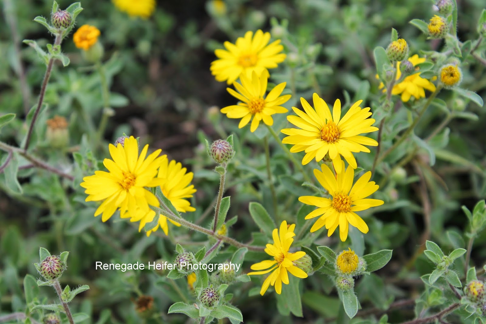 Yellow flower names yellow flower names stock photo yellow photo name cheerful yellow blooms mightylinksfo