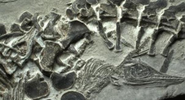 sea monster fossil