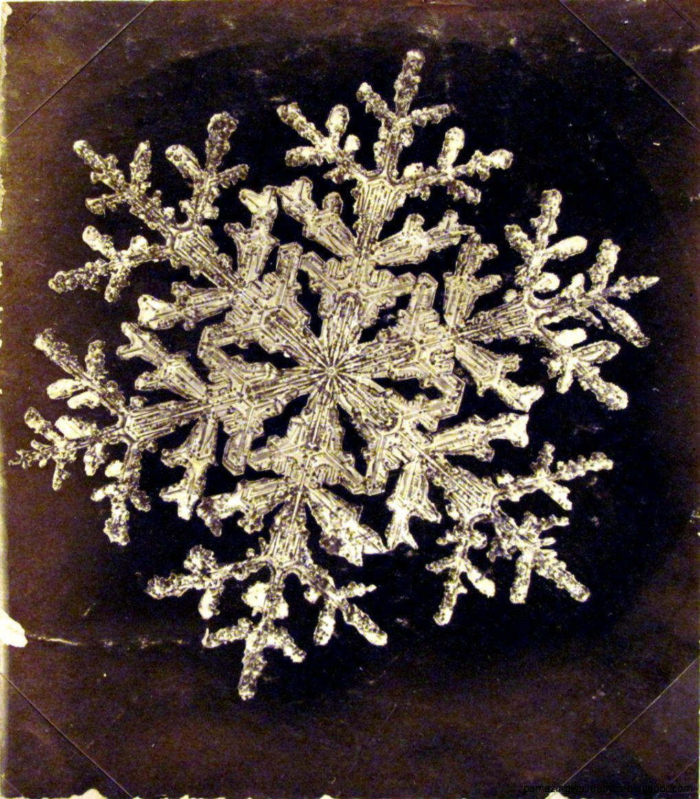 Freaky Faunas Tumblr   Photograph of a snowflake by Wilson Alwyn