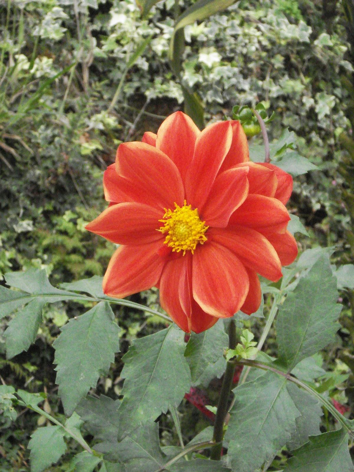 DK CELLULER,RIKILLAGASKADA: deliya flowers