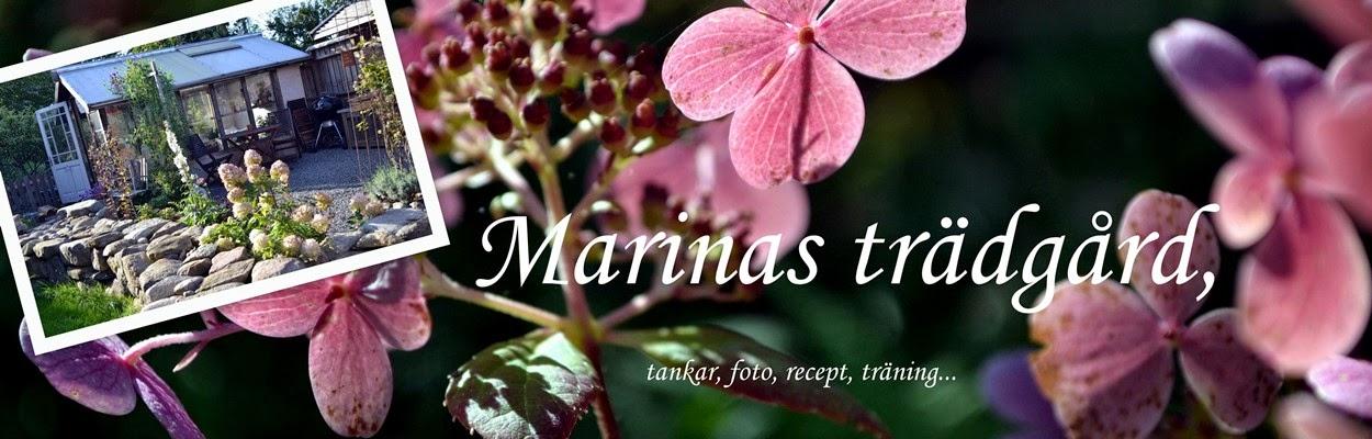 Marinas trädgård