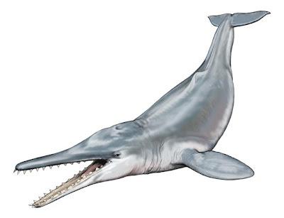 ballenas prehistoricas Squalodon