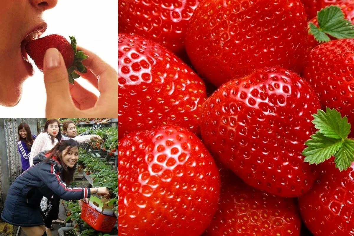 Growing Strawberry to Earn Money