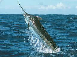 Deep Sea Fishing Mersing Malaysia Hunting Grounds for Marlins and Tenggiri