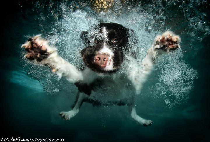 Underwater dog 17