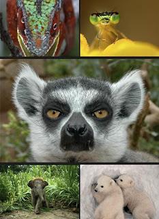 Картинки с животными на рабочий стол