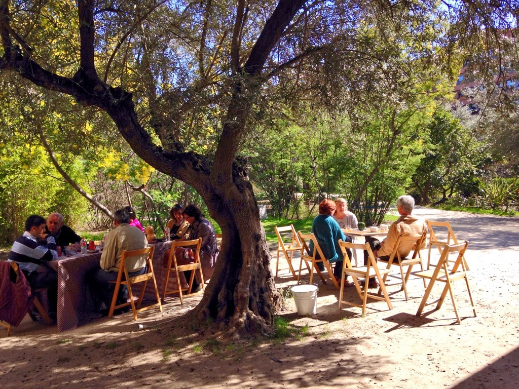 a nice aperitivo under the olive trees